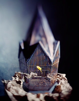 Yellow Bird in Cage - p6940864 by Jeff Padrick