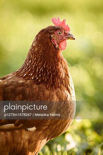 p1273m1578247 by Melanka Helms