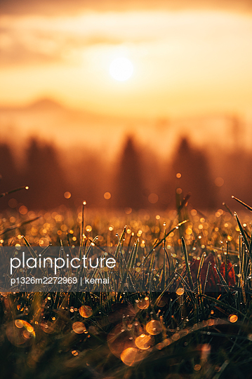 Morning dew - p1326m2272969 by kemai