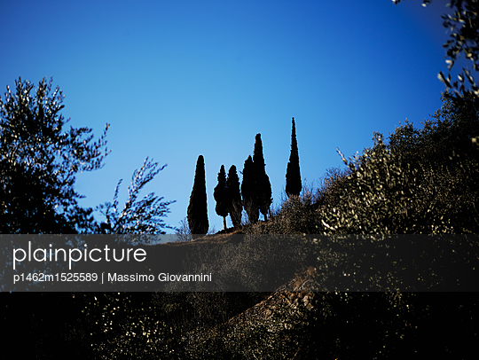 Baumgruppe in der Nacht - p1462m1525589 von Massimo Giovannini