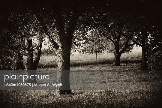 p343m1089875 von Megan S. Wyeth