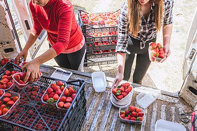 Agriculture work in strawberry field, Huelva, Spain - p300m2286211 von Julio Rodriguez