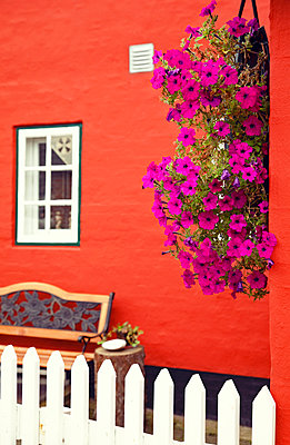 Flowers on the house wall - p382m1591162 by Anna Matzen