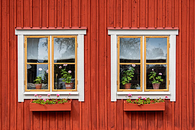 Old house with geraniums in windows - p1418m2184992 by Jan Håkan Dahlström