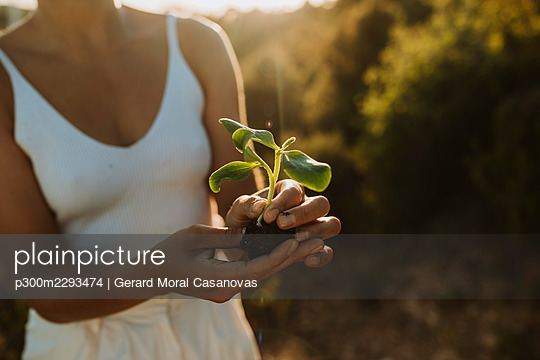 Woman with plant sapling during sunset - p300m2293474 by Gerard Moral Casanovas