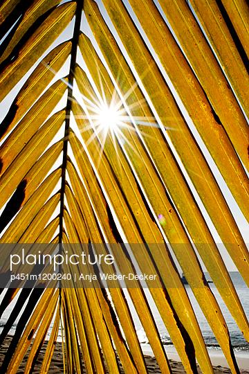 Palmenblatt im Gegenlicht - p451m1200240 von Anja Weber-Decker