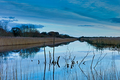 Avalon Marshes at Shapwick Heath Nature Reserve in Somerset, UK - p871m895780 by Tim Graham