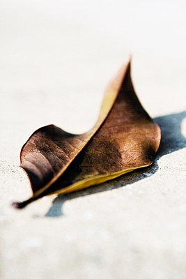Autumn leaf - p1084m1036798 by GUSK