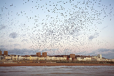 Flock of birds at seaside - p3882275 by Astrid Schulz