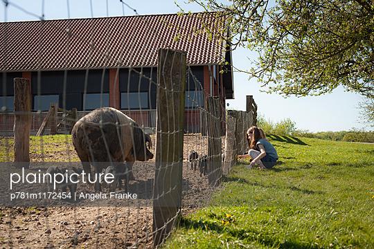 Bei den Schweinen - p781m1172454 von Angela Franke