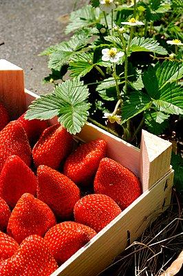 Strawberries - p067m907043 by Thomas Grimm