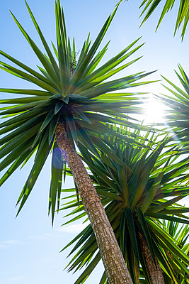 Spiny leaves of palm trees  - p1057m2124794 by Stephen Shepherd