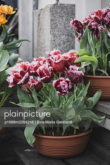 Flowers of Amsterdam - p1688m2284216 by Eva-Maria Gebhardt