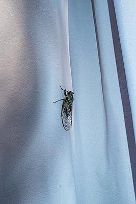 Cicada - p1291m2004870 by Marcus Bastel
