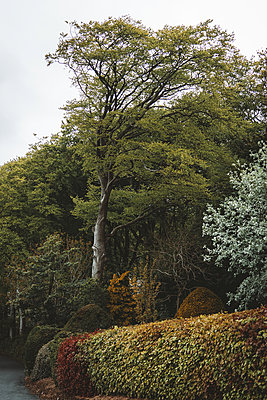 Hedge and trees in autumn colours - p1681m2283673 by Juan Alfonso Solis