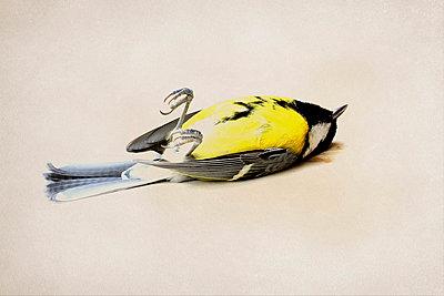Dead bird - p4500505 by Hanka Steidle