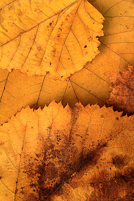 Autumn still life - p977m755808 by Sandrine Pic