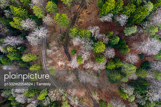 Switzerland, Flawil, St. Gallen, Aerial view, Forest - p1332m2204624 by Tamboly