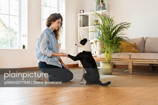 Jack Russell Terrier shaking hand with woman kneeling on hardwood floor at home - p300m2277549 by Steve Brookland