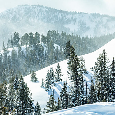 United States, Idaho, Sun Valley, Snowy forest in winter - p1427m2271731 by Steve Smith