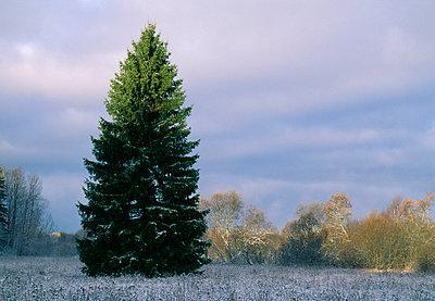 Tree on grassland - p5752143f by Stefan Ortenblad