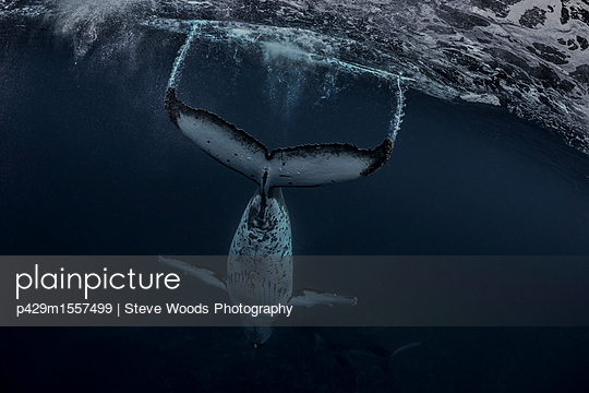 p429m1557499 von Steve Woods Photography