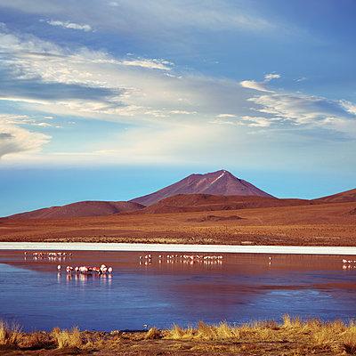 Andenflamingos in der Laguna Hedionda - p1038m1575364 von BlueHouseProject