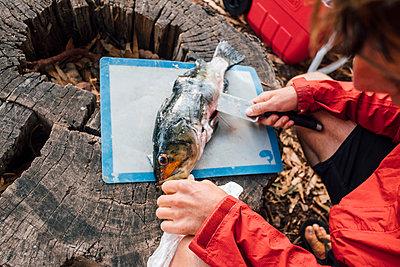 Over shoulder view of young man filleting fresh fish on tree stump, Santa Cruz Island, California, USA - p924m1506728 by JFCreatives