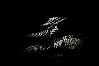 Fern - p945m2157554 by aurelia frey