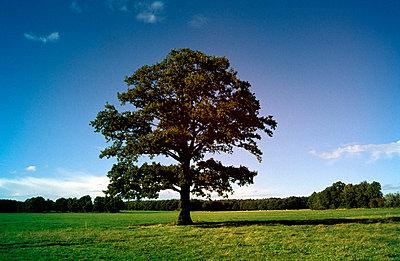 Einzelner Baum auf der Wiese - p0190116 von Hartmut Gerbsch