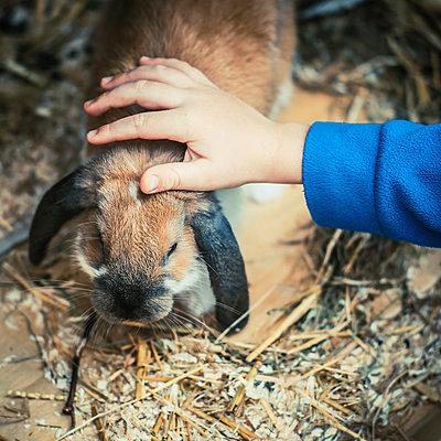 Rabbit - p750m923925 by Silveri