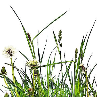 Blumenwiese - p6470136 von Tine Butter