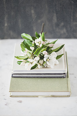 Apple Blossom on books - p1470m2054319 by julie davenport