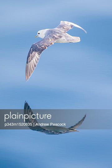 p343m1520835 von Andrew Peacock