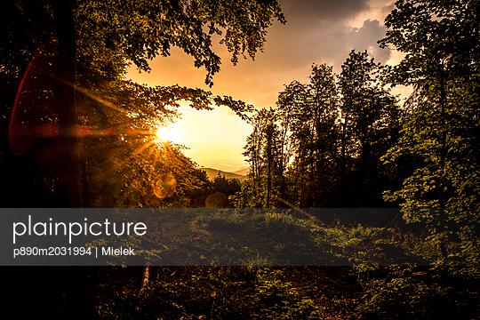 Abend im Wald - p890m2031994 von Mielek
