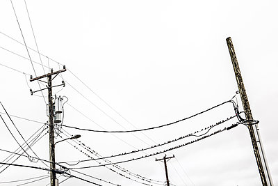 USA, Vögel auf Telegrafenmast - p1082m2244957 von Daniel Allan
