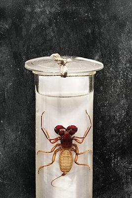 Aanatomical specimen - p450m1123602 by Hanka Steidle
