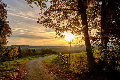 Germany, Bavaria, Upper Bavaria, Miesbach, Taubenberg, forest track in autumn at sunrise - p300m1535238 by Lisa und Wilfried Bahnmüller