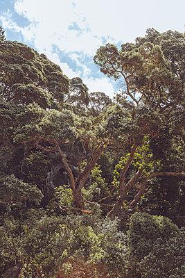Virgin forest, Coromandel peninsula, New Zealand - p756m2157850 by Bénédicte Lassalle