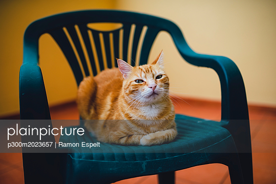 Portrait of ginger cat resting on a chair - p300m2023657 von Ramon Espelt