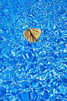 Dried leaf floating on the surface in the pool - p1057m2133021 by Stephen Shepherd