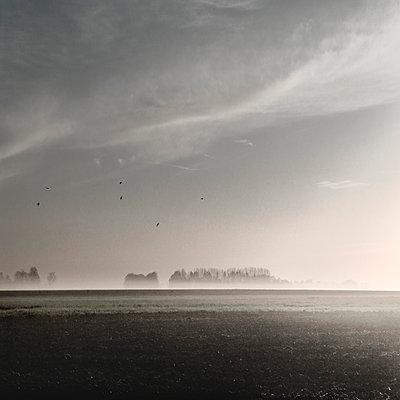 Feld in der Normandie - p1137m939542 von Yann Grancher