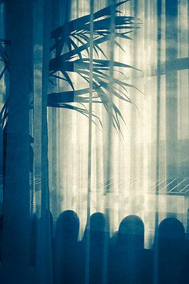 Light - p1245m1043437 by Catherine Minala