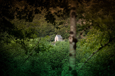 Hidden house in the woods - p1007m854039 by Tilby Vattard