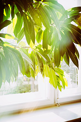 Houseplant in morning light - p1149m1162687 by Yvonne Röder