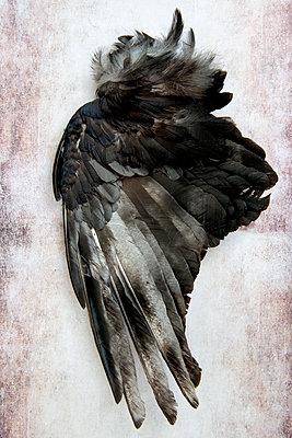 p451m2185855 by Anja Weber-Decker