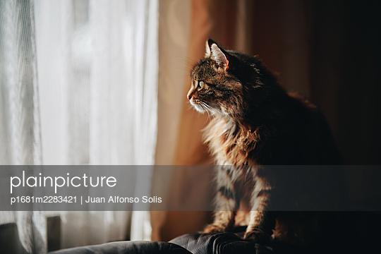 Cat at the window - p1681m2283421 by Juan Alfonso Solis