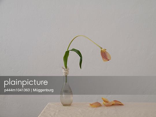 Das letzte Blütenblatt - p444m1041363 von Müggenburg