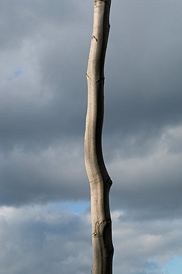 Tree at baltic sea - p1781060 by owi