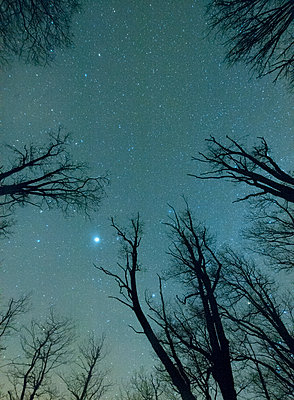 Trees against starry sky - p312m1103982f by Martin Almqvist